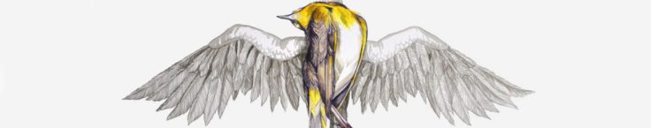 cropped-cropped-banner-bird1.jpg