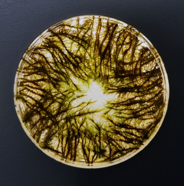 landscape illuminated 1, detail4