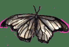 Philippa Jones, Still of 1 of 20 animated moths from 'Drawn' exhibited in 'The New Romantics' 2012