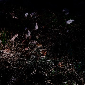 sortie-parc-luberon-06