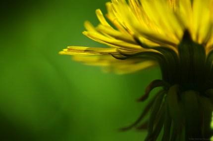 A l'abri de la fleur