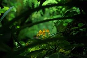 L'or de la jungle