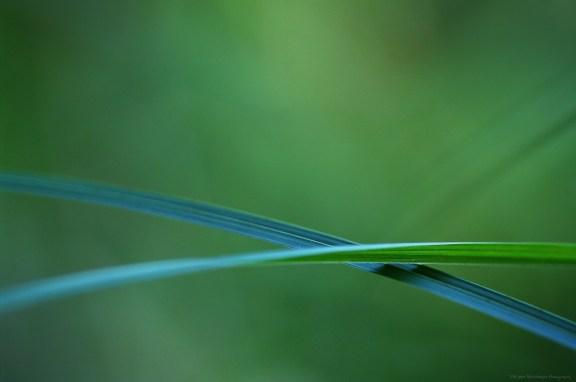 Minimalisme végétal