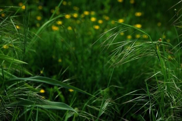 De graines et de fleurs