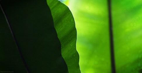 50 nuances de vert