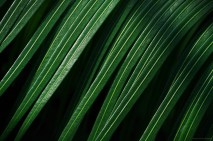 Une pluie de palmes