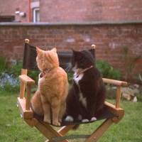 f)Cats