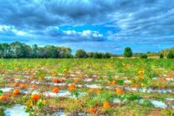 pumpkin02b