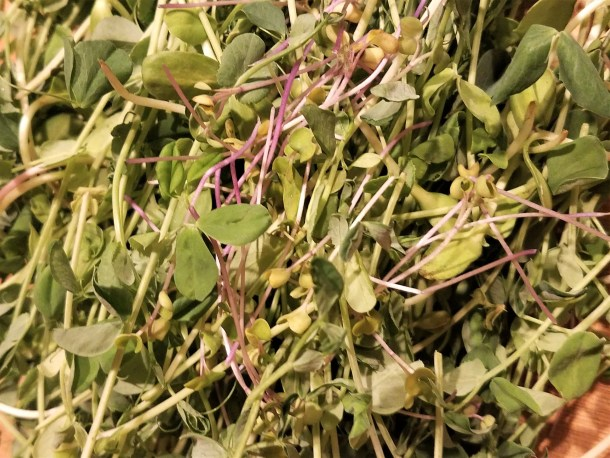 Closeup of microgreens