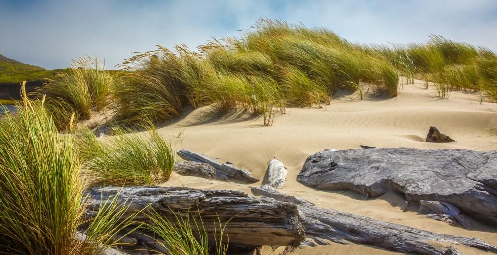 Beach Grass - 15-910