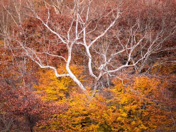 White Tree - 17-22