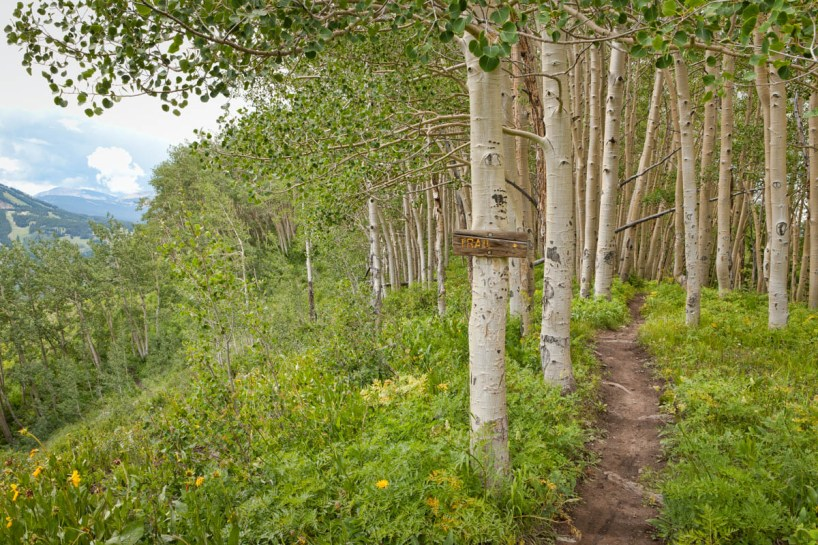 aspen grove with trail sign