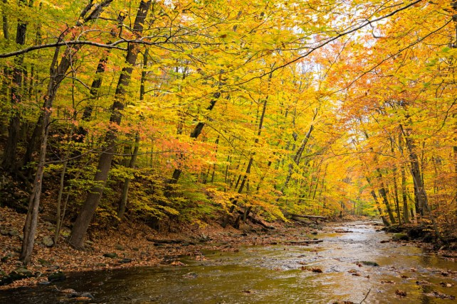 mill river with fall color