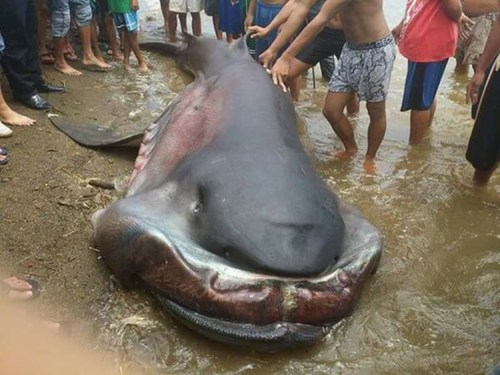 Another Strange Sea Creature Found In Coastal Area Of Cebu