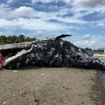 Dead Whale Sculpture