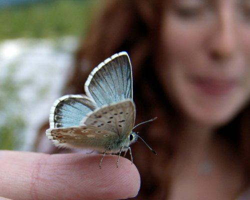 The touch of a butterfly is light and fleeting. If you are stuck in the past or the future, you might not even notice that it is present.
