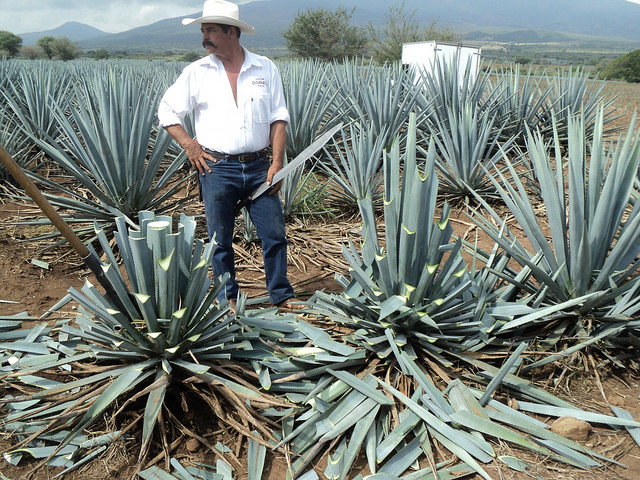 The ability to wield a machete can help you in agriculture, or to do less honorable things.