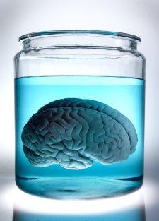 brain in a vat hilary putnam