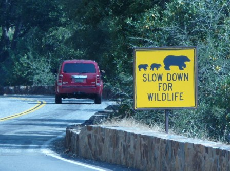 Sequoia_National_Park_-_Slow_down_for_wildlife_sign