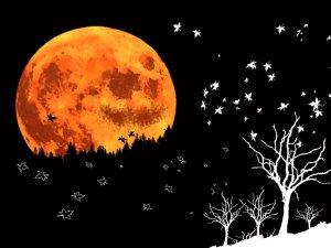 Hallowee-Autumn-Moon-autumn-35580356-900-675