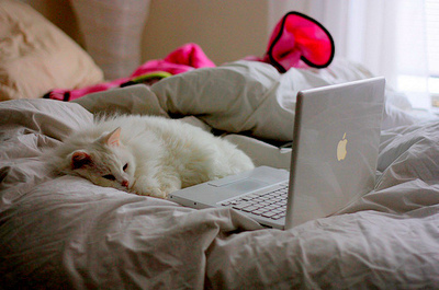 bed-cat-cute-macbook-white-Favim.com-43425