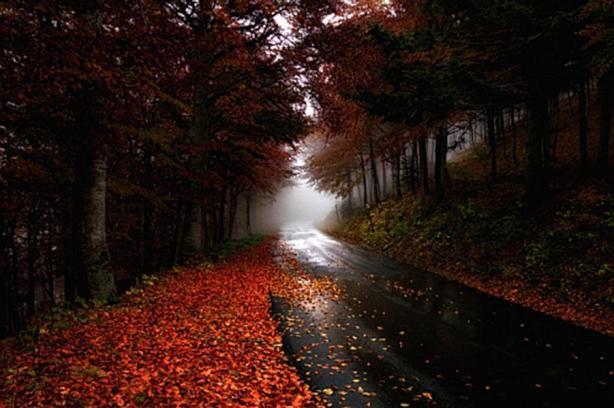 autumn_road-966828