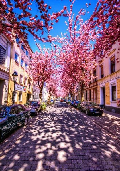 flower-road.png