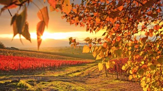 07/11/2010, Italy --- Italy, Umbria, Mediterranean area, Perugia district, Dawn over the autumnal vineyards near Montefalco --- Image by © Maurizio Rellini/SOPA RF/SOPA/Corbis