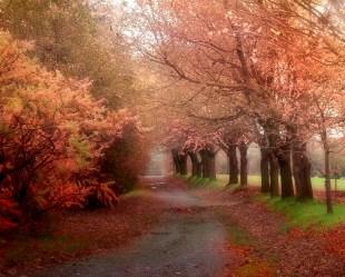 Autumn-in-Montreal-Quebec-Canada