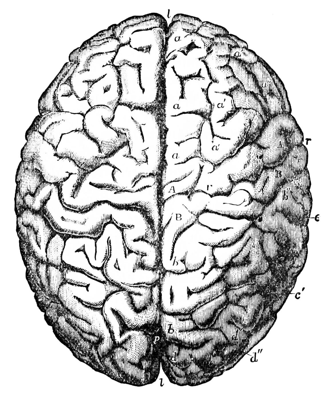 """Symposium on Bernard Molyneux, """"The Logic of Mind-Body Identification"""""""