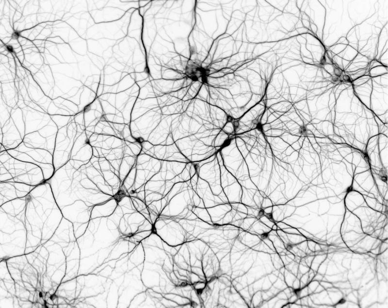 Systems Neuroscience Highlights: April 2018