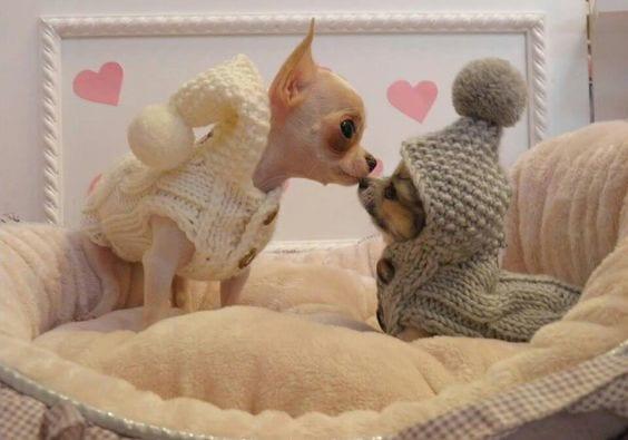 Tiny Puppy Kiss