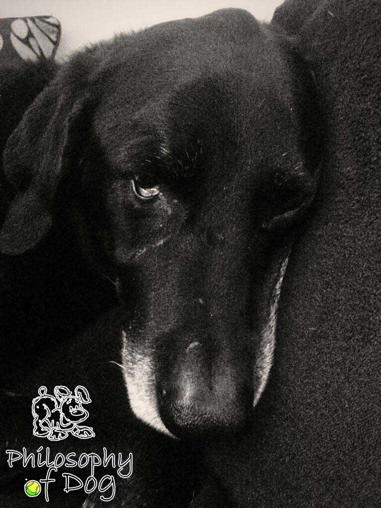 Jet Copyright Philosophy of Dog