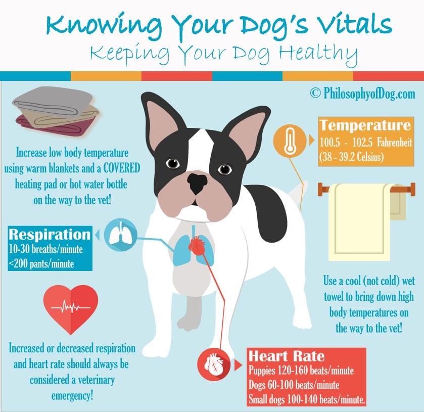 Know Your Dog's Vitals Copyright PhilosophyofDog.com