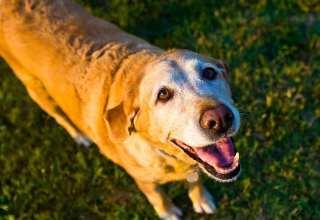 Owning a Senior Dog