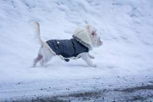 When Does My Dog Need a Coat?
