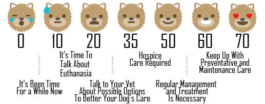 Assessing Your Senior Dogs Health