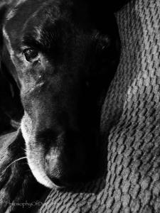 Jet Copyright 2017 Philosophy of Dog