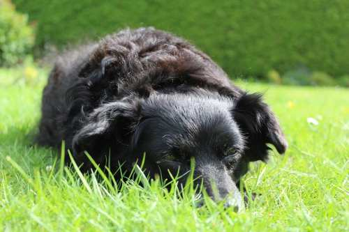 There is something special about owning a senior dog