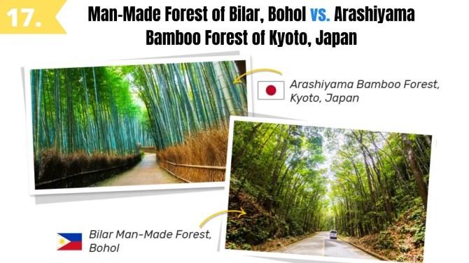 man made forest bilar bohol like arashiyama bamboo grove kyoto japan