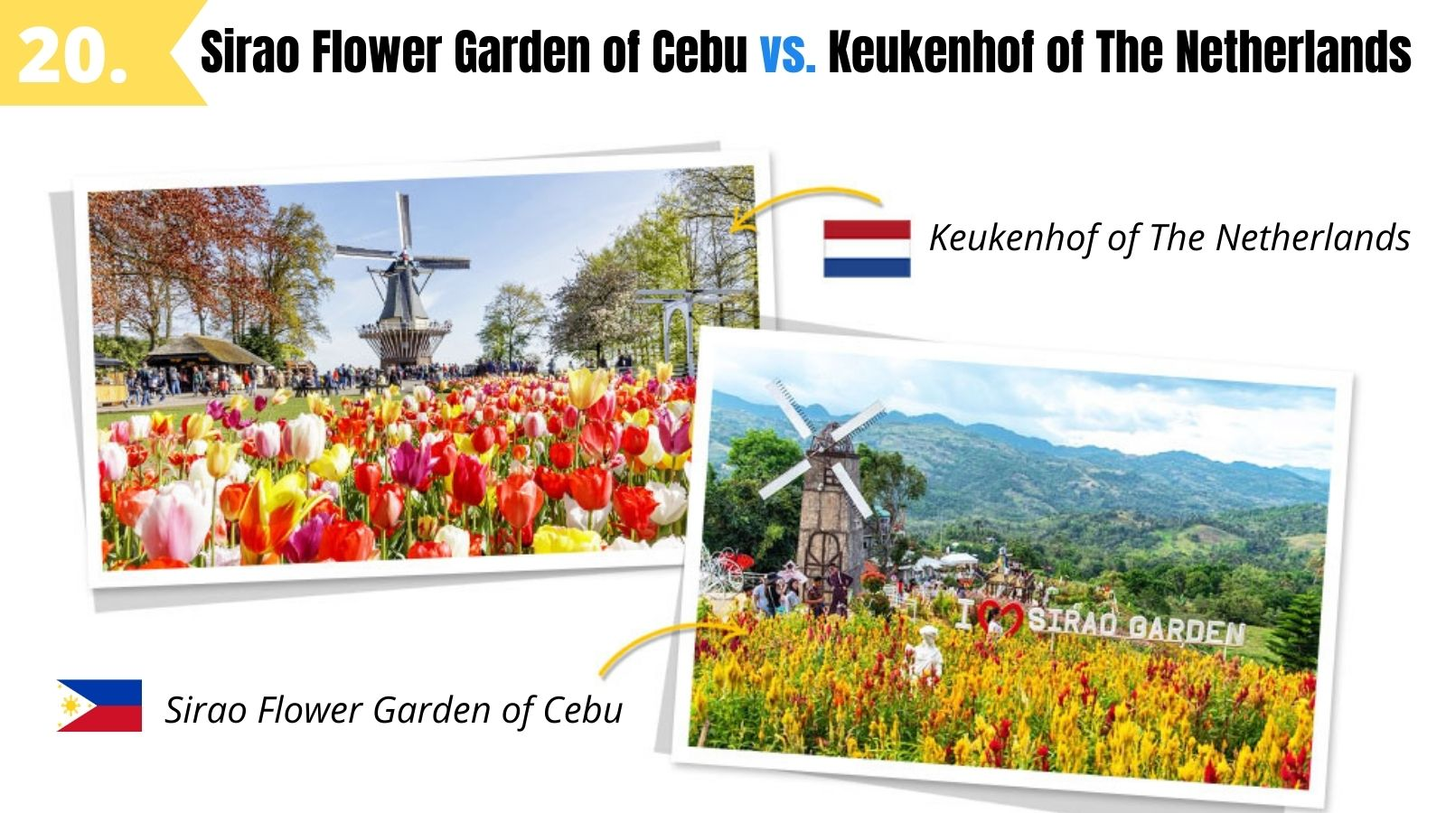 sirao flower garden mini amsterdam of cebu
