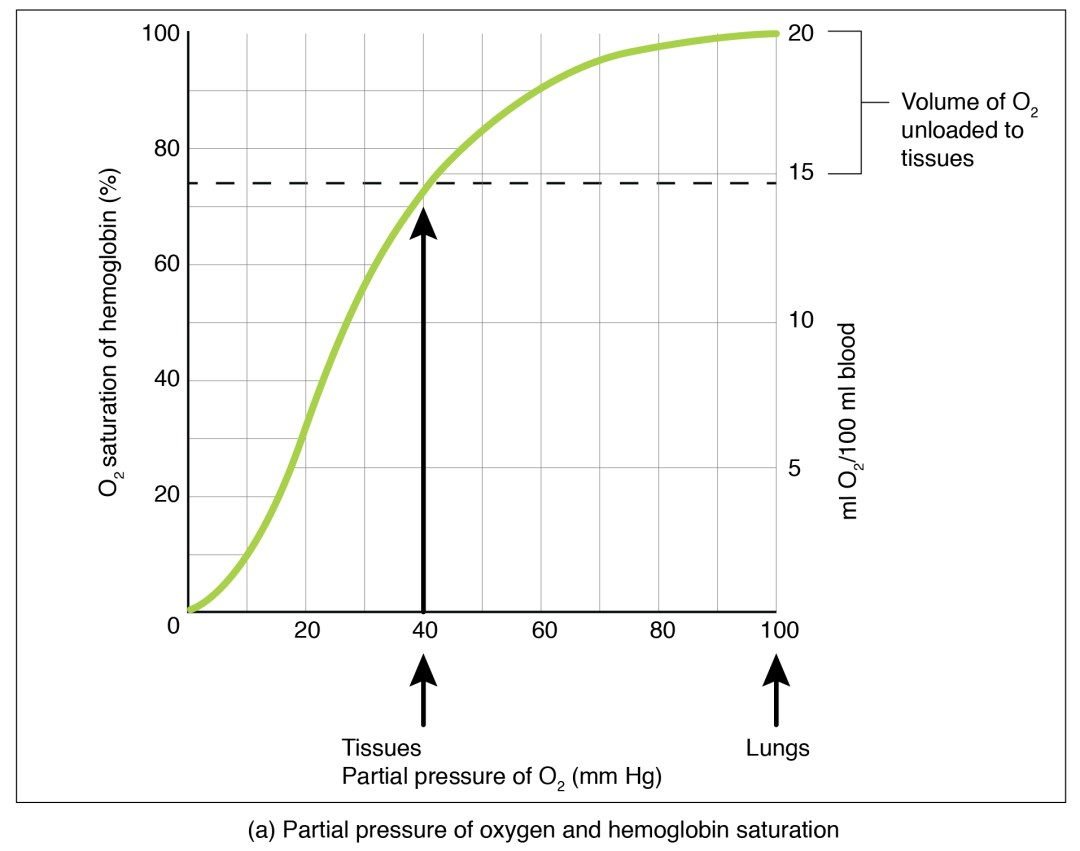 The top panel of this figure shows a graph with oxygen saturation of the y-axis and partial pressure of oxygen on the x-axis.