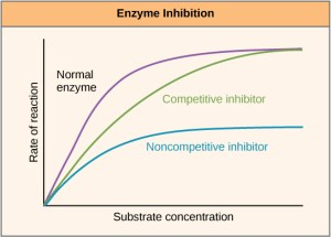 Enzymes · Biology