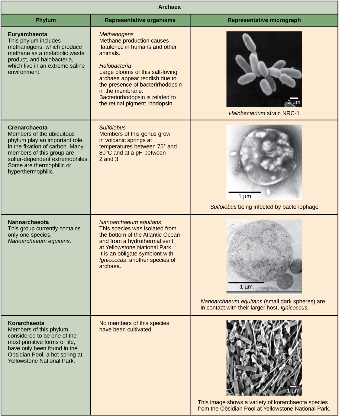 Structure Of Prokaryotes Biology