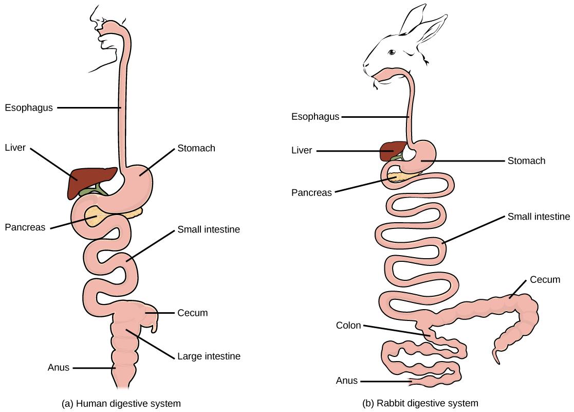 Digestive Systems Biology