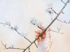 Spring - Back to life | Photo by Roman Kraft on Unsplash