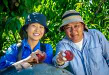 Fruit harvesters | Photo: Greater Shepparton City Council