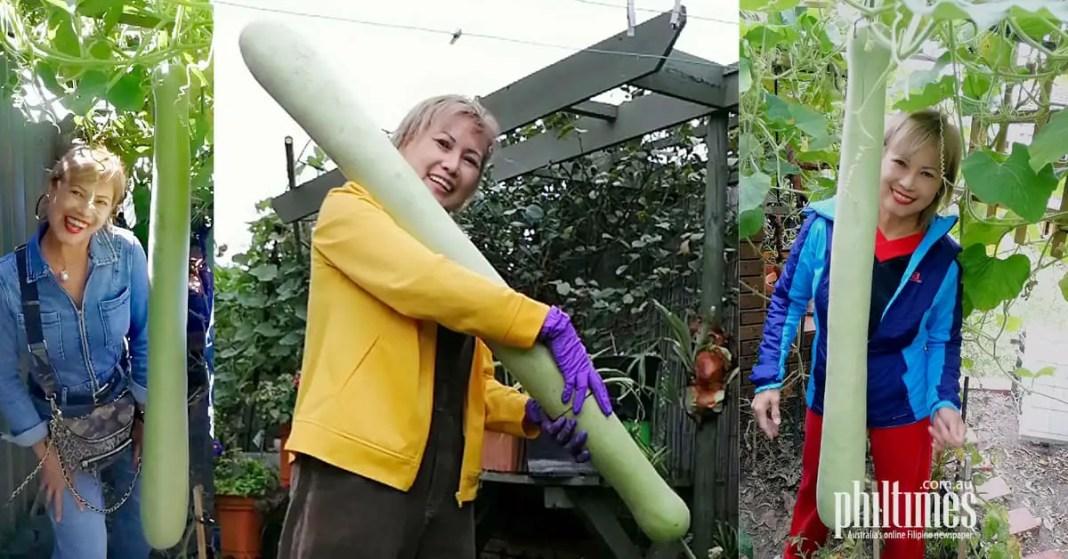 Giant upo (bottle gourd) grown by Rose Simonsen