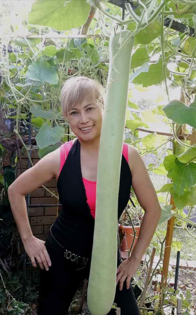 Giant upo (bottle gourd) grown by Rose Simonsen