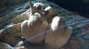 Deb's cats: Meep and Lotus
